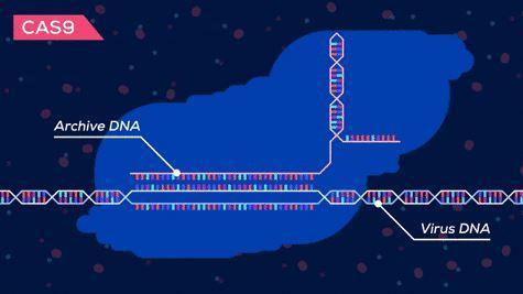 Archive DNA vs Virus DNA